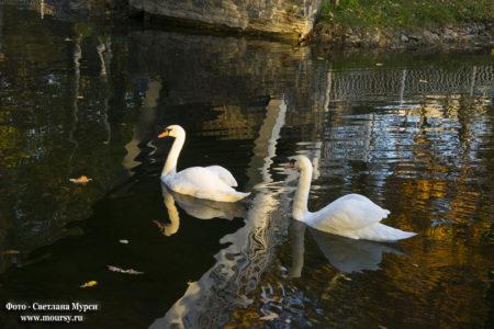Золотая осень. Фото - Светлана Мурси